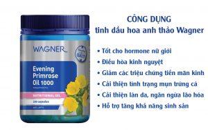 công dụng tinh dầu hoa nh thảo wagner