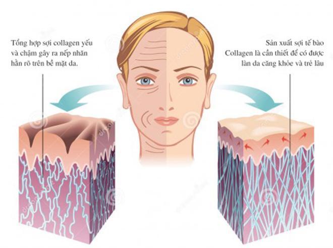 Sử dụng collagen bao lâu có kết quả