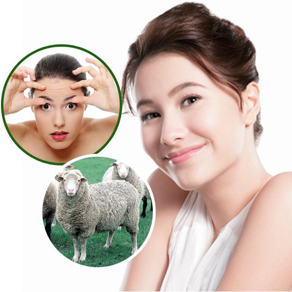 Nhau thai cừu chính hãng mua ở đâu